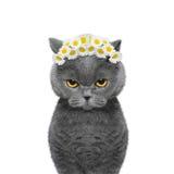 Kranz der Kamille blüht auf dem Kopf einer Katze Lizenzfreies Stockfoto