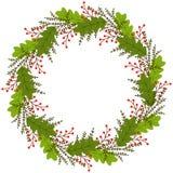 Kranz mit Blättern und roten Beerenbrunchs stock abbildung