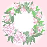 Kranz mit zwei rosa Pfingstrosen und Blumen lizenzfreie abbildung