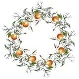 Kranz von einer Niederlassung mit Orangen Getrennt auf weißem Hintergrund Lizenzfreie Stockfotos