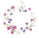 Kranz von Gartennelken und von blauen Blumen vektor abbildung