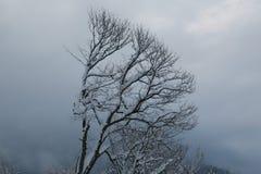 Krasnaya Polyana. Trees in winter on the slopes of Aibga Stock Photos