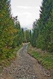 krasnodar дорога Россия зоны горы Стоковое Фото