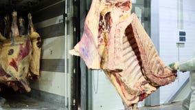 Krasnodar, Rusland - 01 25 2018: De slagers maken de karkassen van koeien in het pakhuis leeg De varkensvleeskarkassen hangen op  stock videobeelden