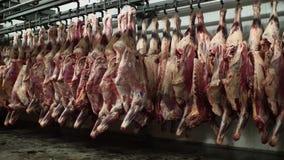 Krasnodar, Rusland - 01 25 2018: De slagers maken de karkassen van koeien in het pakhuis leeg De varkensvleeskarkassen hangen op  stock video