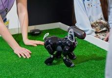 Krasnodar Ryssland, mars, 2019: festival av robotar Robothunden AIBO utför kommandon arkivbild