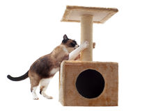 Krassende kat Royalty-vrije Stock Afbeelding