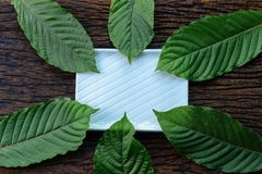 Krata Mitragyna speciosa Mitragynine liści ramy wzór na białym ceramicznym talerzu i drewnianym tle fotografia royalty free