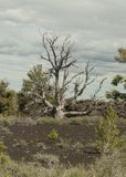 Krater av månenationalparken Royaltyfria Bilder