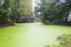 Krater vom ersten Weltkrieg füllte mit grünem Wasser Stockfotos