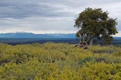 Kraters van het Maan Nationale Monument en het Domein, Arco, Idaho stock foto