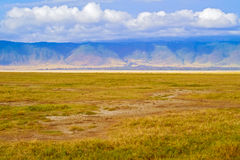 krateru ngorongoro Tanzania Obrazy Stock
