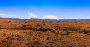 krateru ngorongoro Tanzania Fotografia Royalty Free