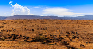krateru ngorongoro Tanzania Zdjęcia Royalty Free