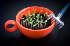 Kratta och göra grön groddar i orange kopp på svart Arkivfoto