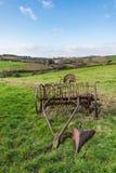 Krattar utdraget hö för den gamla rostiga hästen i ett gräsfält med Devonshire bygd och kullar i bakgrunden royaltyfria foton