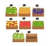 Kratten met verse groenten Stock Afbeeldingen