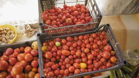 Kratten van de tribune van de oogsttomaat in de dorpsschuur stock video