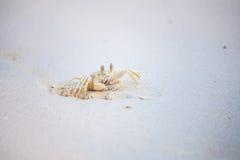 Kratzen Sie Grabung der Sand herein auf dem Strand Schaffen Sie das sichere Eigentum für das Leben Lizenzfreies Stockbild
