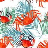 Kratzen Sie nahtloses Muster des Aquarells, Marinebeschaffenheit, Muster mit Krabben Lizenzfreies Stockbild