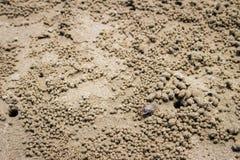 Kratzen Sie, Ocypode (Ocypodidae), Windkrabbe spielen auf dem Sand lizenzfreie stockfotografie