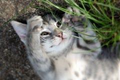 Kratzendes Kätzchen lizenzfreies stockfoto