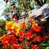 Krause Springs Royalty Free Stock Photo
