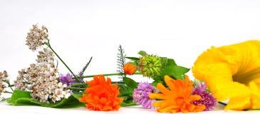Krautbetriebsblumen Stockfotografie