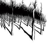 krawędź las Obrazy Stock