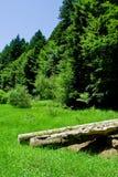 krawędź las blisko określa drewna Zdjęcia Stock