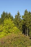 Krawędź las w spadku Fotografia Stock