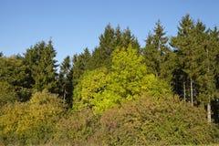 Krawędź las w spadku Obraz Stock