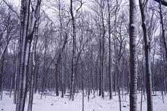 krawędź las zimy Zdjęcia Stock