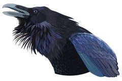 Kraxa svart galande royaltyfri illustrationer