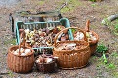 Körbe voll von verschiedenen Pilzen im Wald Lizenzfreies Stockbild