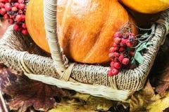 Kürbise für Halloween in einem Korb Lizenzfreies Stockbild