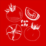 Kreślący pomidor na czerwonym tle Obraz Royalty Free