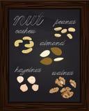 Kreśli orzechy włoskich, migdałów nerkodrzewów arachidów hazelnuts Obrazy Royalty Free
