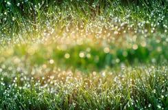 Kreative Collage Frühling, frisches Gras mit Tau Farbe in der Natur Lizenzfreie Stockbilder