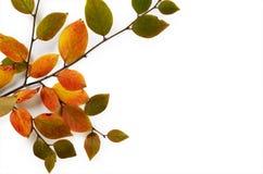 Kreative Herbstzusammensetzung Baumast und Gelb verlässt auf einem weißen Hintergrund Lizenzfreies Stockbild