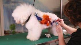 Kreative Kunst am Haustiersalon stock video