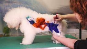 Kreative Kunst mit einem Hund am Haustiersalon stock video