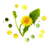 Kreative Malerei des gelben Löwenzahns in den Farbspraytröpfchen Lizenzfreie Abbildung
