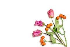 Kreative Musteranordnung Herbstzusammensetzung gemacht von getrockneten Blättern, von dogrose Beeren und von Blume auf weißem Hin Lizenzfreie Stockfotos