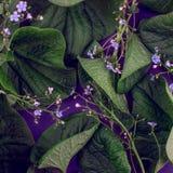 Kreative Natur verlässt Plan Übernatürliches Konzept, ultraviolettes färbt Hintergrund, Modeart Lizenzfreie Stockfotografie
