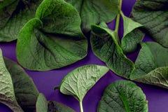 Kreative Natur verlässt Plan Übernatürliches Konzept, ultraviolettes färbt Hintergrund, Modeart Lizenzfreie Stockfotos