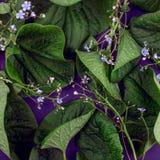 Kreative Natur verlässt Plan Übernatürliches Konzept, ultraviolettes färbt Hintergrund, Modeart Lizenzfreie Stockbilder