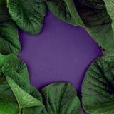 Kreative Natur verlässt Plan Übernatürliches Konzept, ultraviolettes färbt Hintergrund, Modeart, minimaler Sommer, Kopienraum, GR Stockbilder