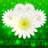 Kreativer Blumenhintergrund des Vektors für Einladung Stockfotos