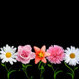 Kreativer Blumenvektor Lizenzfreies Stockfoto